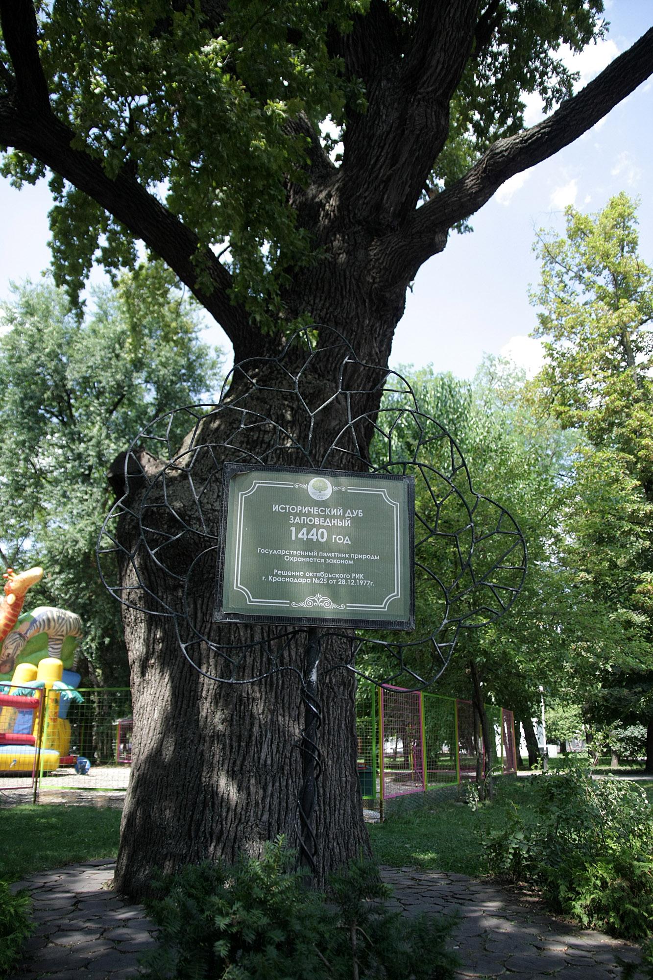 ООПТ Исторический дуб заповедный. Краснодар